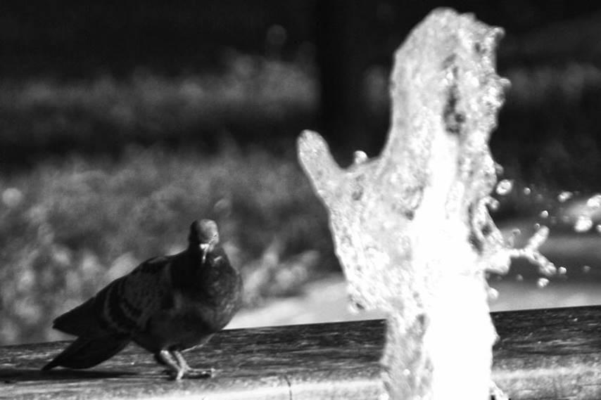 Фонтан в саду баронессы